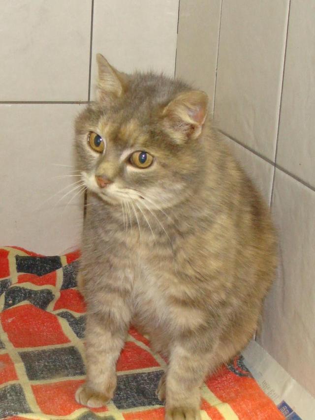 Sansa chatte âgée en cage en cabinet véto - dpt 56/35 Dsc03415-305f415