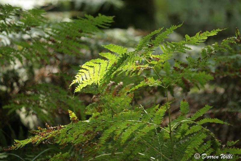 Ballade dans les Hautes fagnes et les sous-bois le 10-08-2011 Img_2673-800x600--2bbd739
