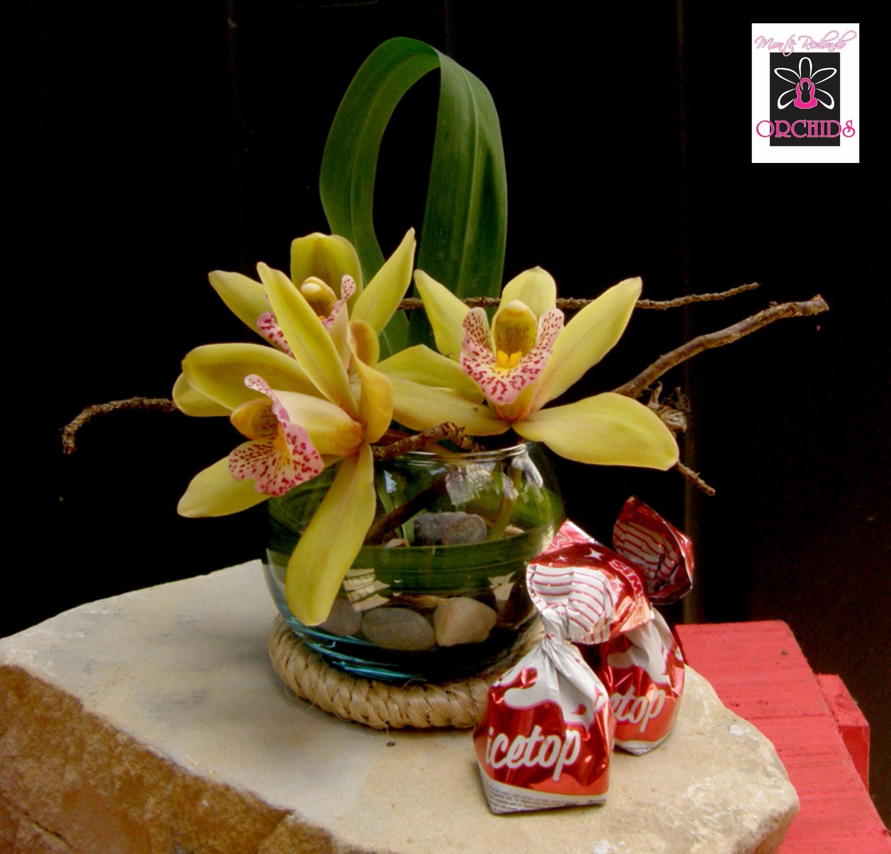 Ikebana 1 Bombonera con orquídeas Cymbidium, cintas naturales, piedras del río Combeima,