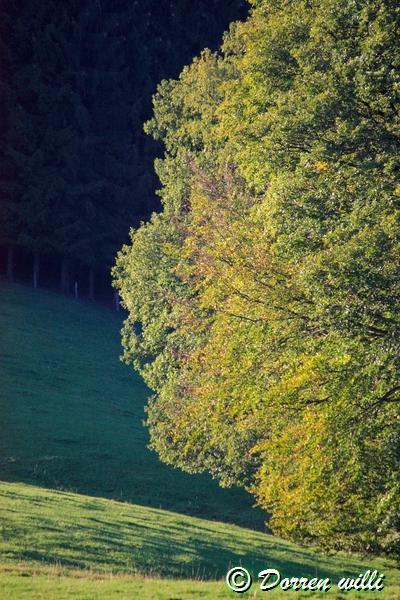 promenade sur les fagnes et alentours ( jalhay ) le 16-oct-2011 Dpp_jalhay---16-o...1---0042-2dd71a5