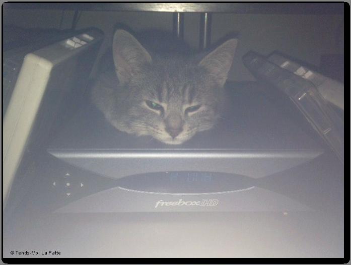 MAC Rebaptisé TIGROU, chaton gris de 2 mois et demi  Mac---co--03-2eb67ad