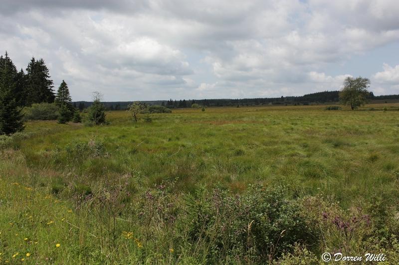 Ballade dans les Hautes fagnes et les sous-bois le 10-08-2011 Img_2637-2-800x600--2bbd60c
