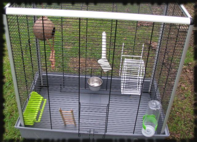 Jenny KD (33) Cage-2f900f5