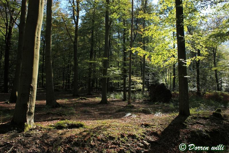 promenade sur les fagnes et alentours ( jalhay ) le 16-oct-2011 Dpp_jalhay---16-o...1---0009-2dd6cb1