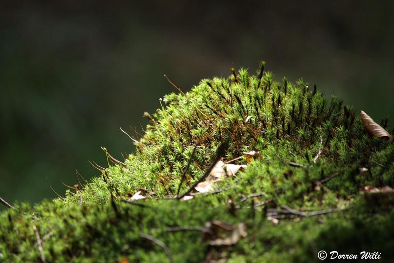 Ballade dans les Hautes fagnes et les sous-bois le 10-08-2011 Img_2688-800x600--2bbd898